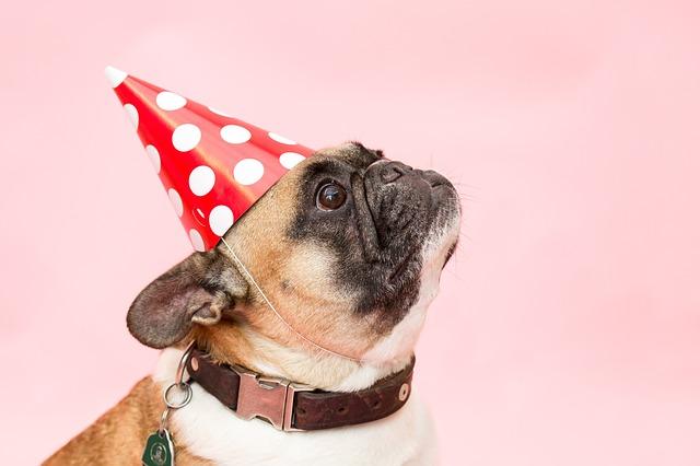 Tårta till hunden
