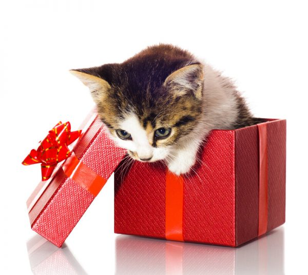 Presenttips till katten